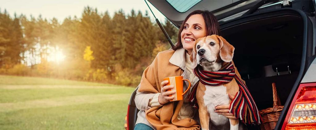 Do Car Rental Agencies Permit You to Bring Your Dogs on Board